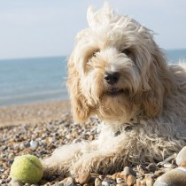 dog friendly lodges suffolk