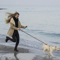 Why Windmill Lodges is Just the Place for Dog-Walkers this Autumn